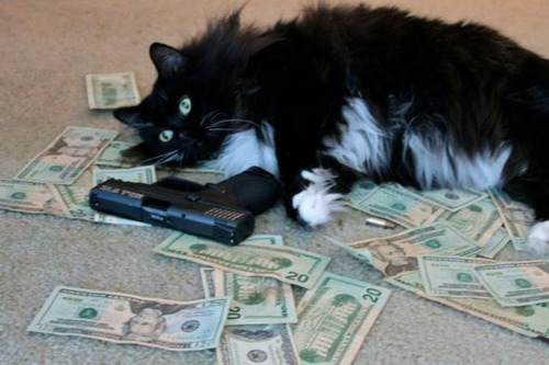 a_few_very_wealthy_cats_640_18