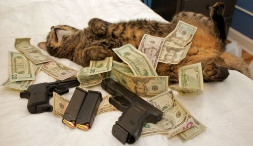 a_few_very_wealthy_cats_640_11