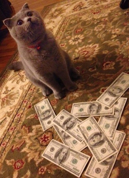 a_few_very_wealthy_cats_640_22