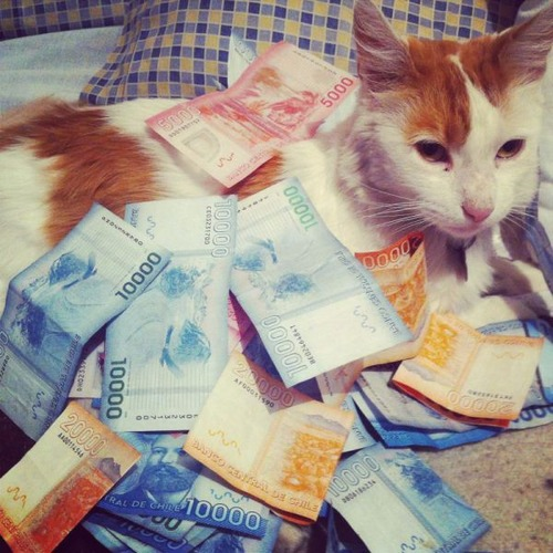 a_few_very_wealthy_cats_640_24