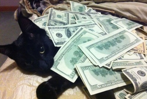 a_few_very_wealthy_cats_640_14