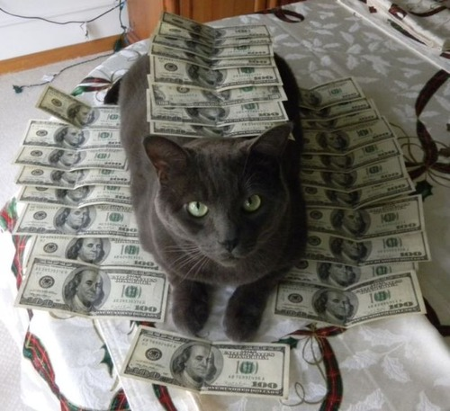 a_few_very_wealthy_cats_640_07