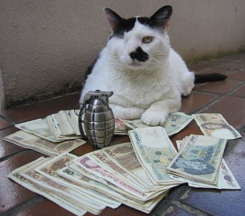 a_few_very_wealthy_cats_640_23