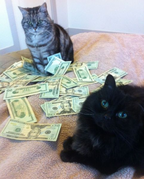 a_few_very_wealthy_cats_640_05
