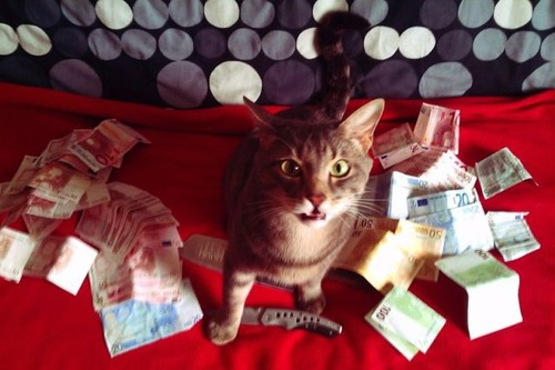 a_few_very_wealthy_cats_640_13