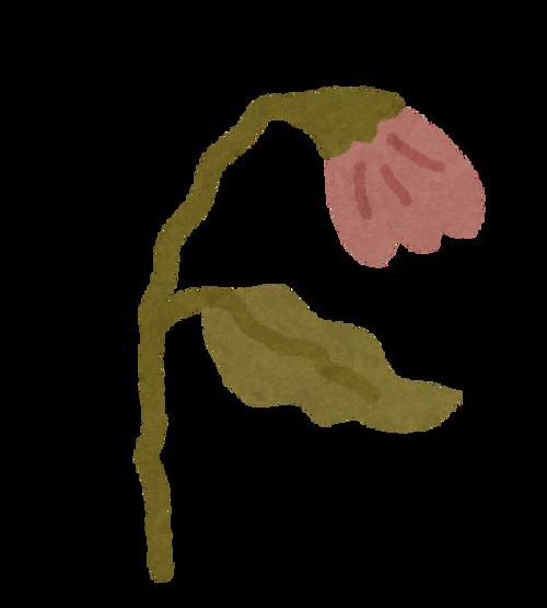 flower_seichou9