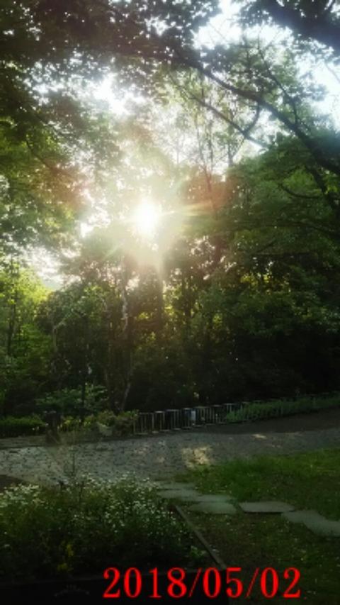 ⑪聖ヶ丘遊歩道木々からの朝日
