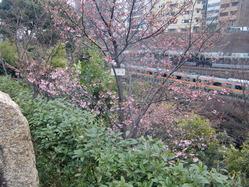 神田川渓谷