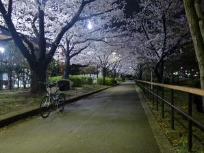 猿江公園夜桜1