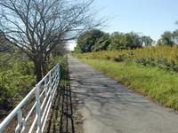 印旛沼自転車道