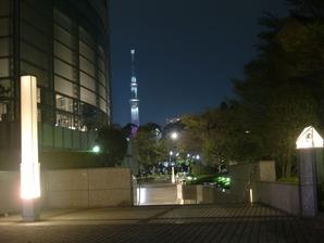 猿江公園夜桜5