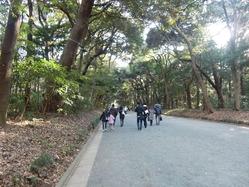 初ポタ明治神宮の森