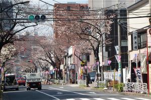 常盤の桜並木