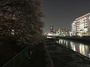 yozakura5