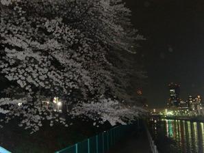 猿江公園夜桜4