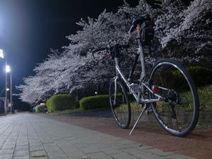 猿江公園夜桜2