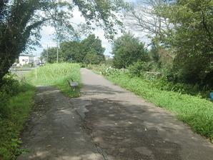 河川沿い遊歩道