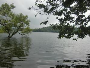 流入河川河口付近