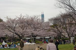 猿江公園とスカイツリー