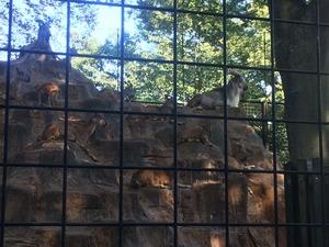 動物公園2