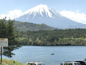 西湖北岸から望む富士