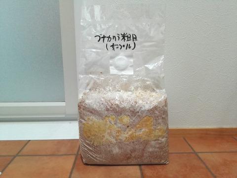 菌糸レビュー 10-2