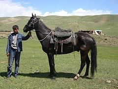 新疆的伊犁马