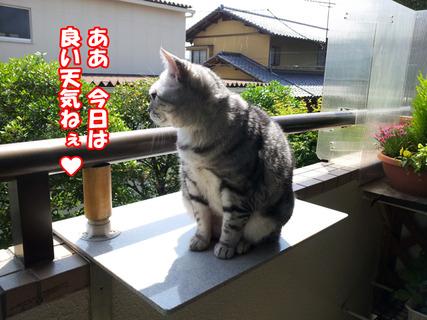 kenkounote01