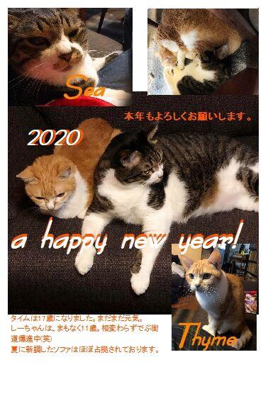 20猫年賀状