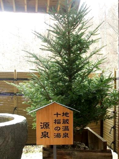 クリスマスを彩ってくれたモミの木