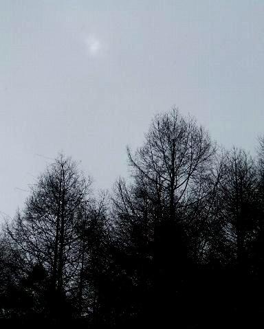 小雪の中、空には薄っすらと月