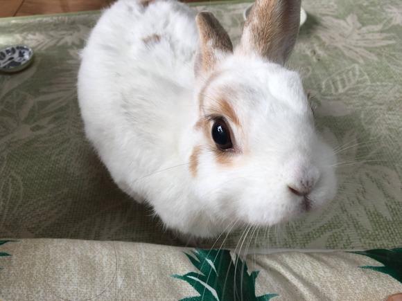 【画像】ワイの飼ってるウサギ 、一番可愛い説wwwwwwwww