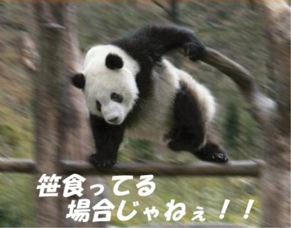 パンダが笹や竹ばっかり食ってる理由wwwwwwwwwwwwwwww