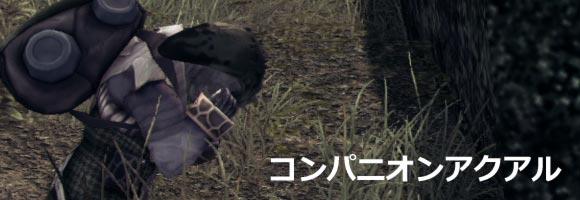 q_companion_akuaru