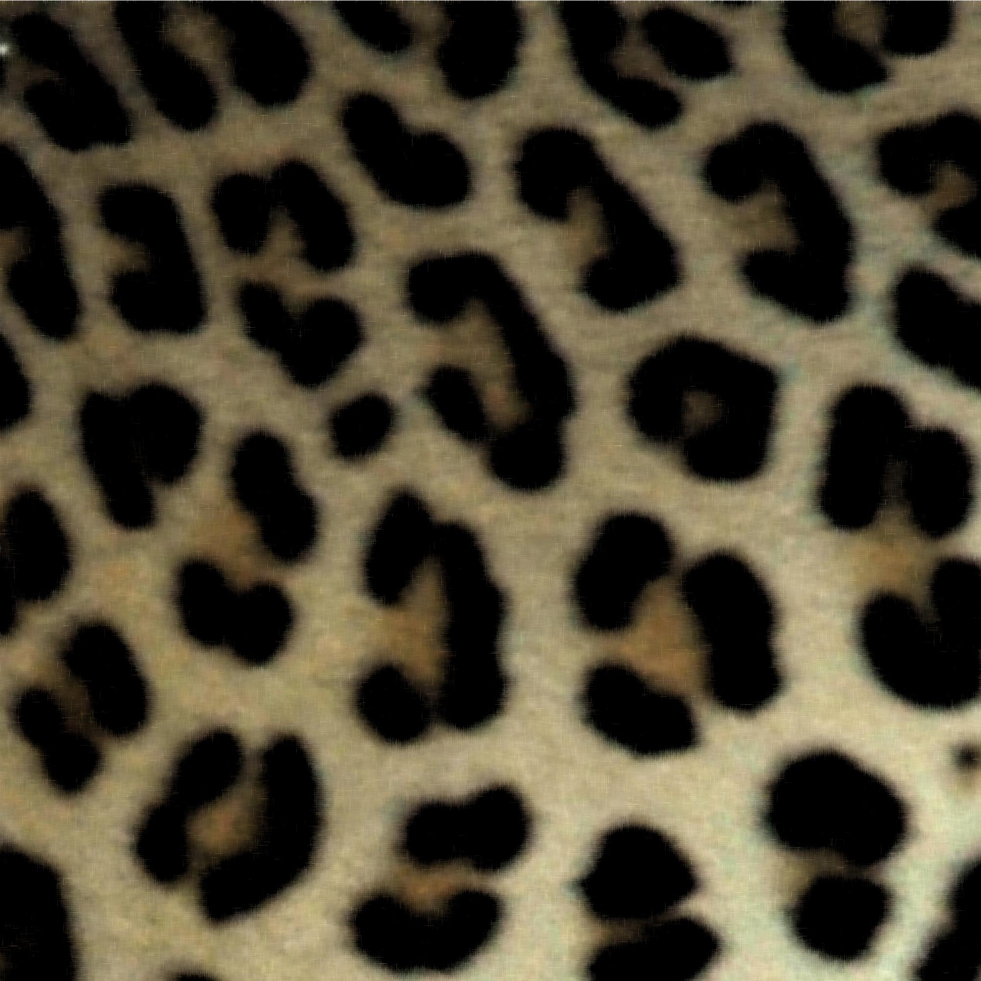ヒョウの画像 p1_23