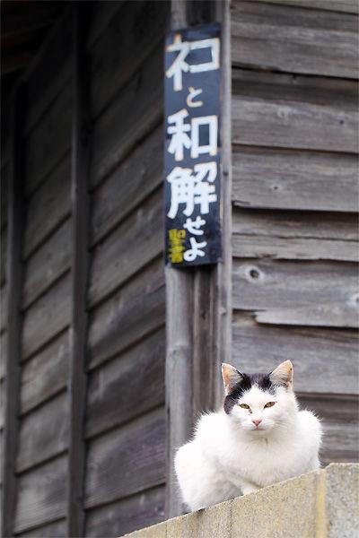 ネコと和解せよの画像集