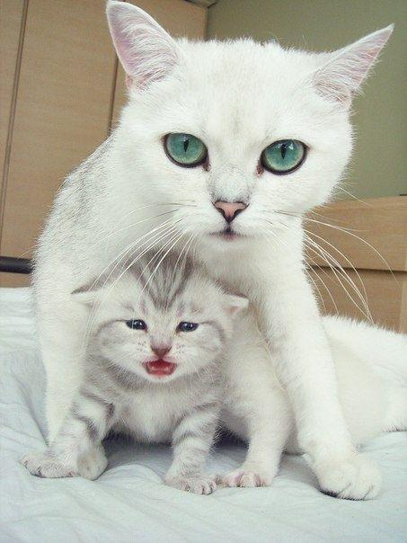 可愛い猫画像ブログ(1091)