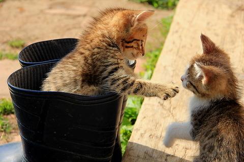 可愛い猫画像ブログ(1227)