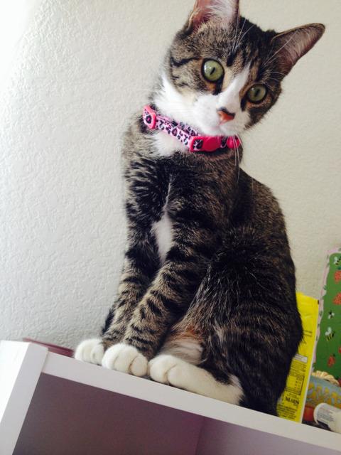 可愛い猫画像ブログ(1325)