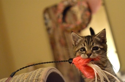 可愛い猫画像ブログ(963)