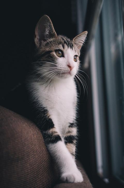可愛い猫画像ブログ(1130)