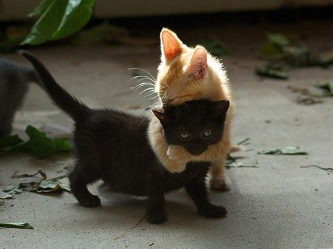 可愛い猫画像ブログ(1213)