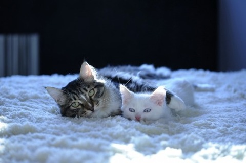 可愛い猫画像ブログ(1274)