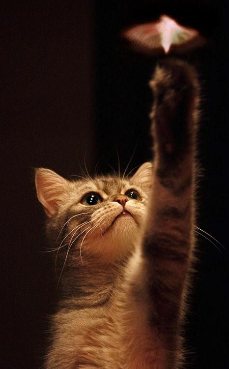 可愛い猫画像ブログ(1351)