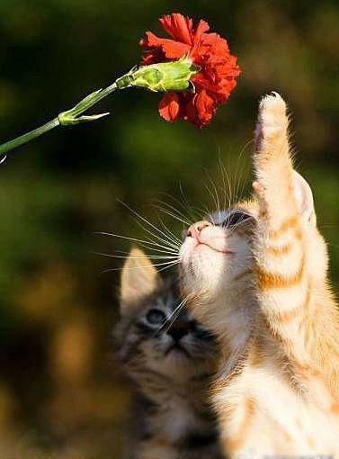 可愛い猫画像ブログ(664)