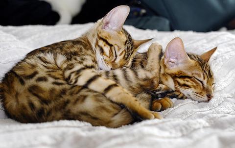 可愛い猫画像ブログ(1014)