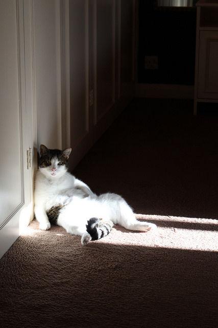 可愛い猫画像ブログ(1285)