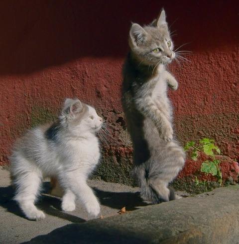 可愛い猫画像ブログ(1236)