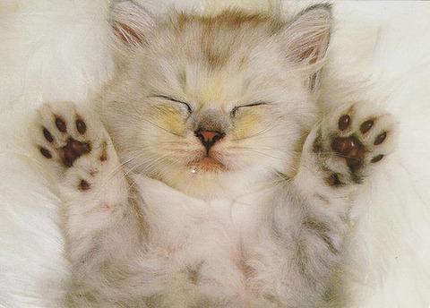 可愛い猫画像ブログ(1133)