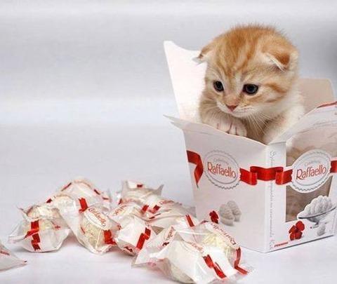可愛い猫画像ブログ(1196)